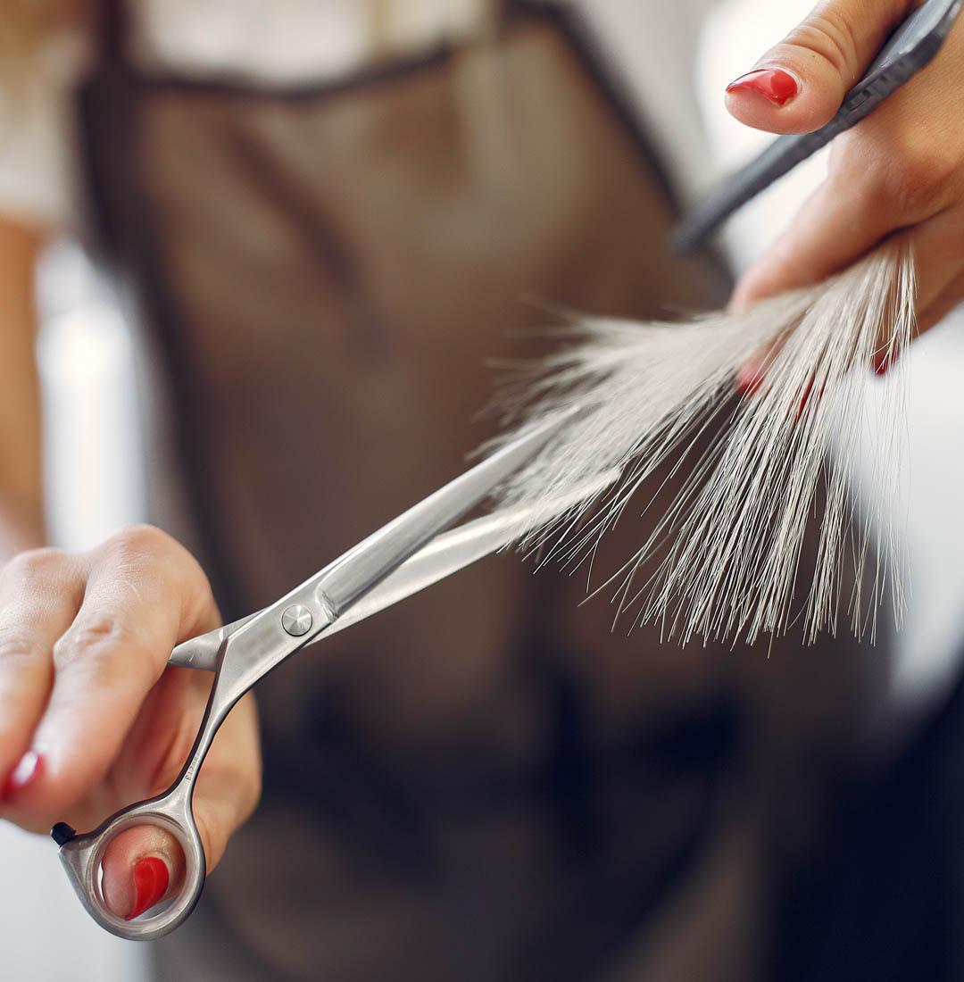Hairdresser cut hair her client. Woman in a hair salon